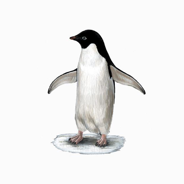 cute penguin drawing
